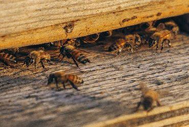 Підтримка бджільництва в обласному бюджеті 2020!