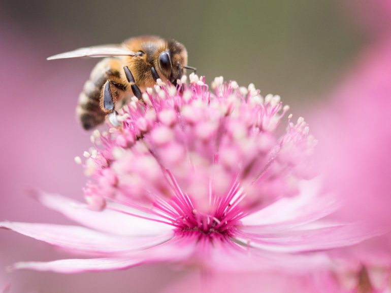 З Всесвітнім днем бджоли!