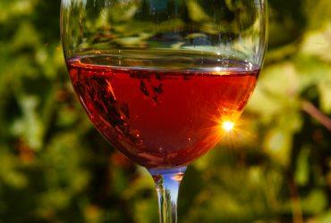 Знайомство з виноробством Закарпаття