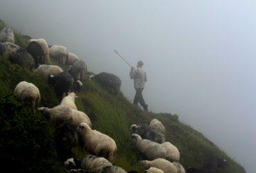 Відкриваємо для світу неймовірно цікаві традиції вівчарства