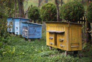 Збережемо бджолу-збережемо планету!