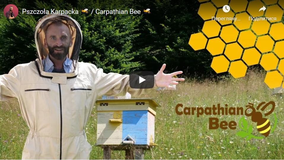 Слідами Карпатської бджоли