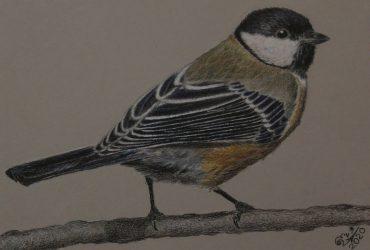 З нагоди Міжнародного дня птахів розповідаємо про особливості та унікальний спів деяких пернатих