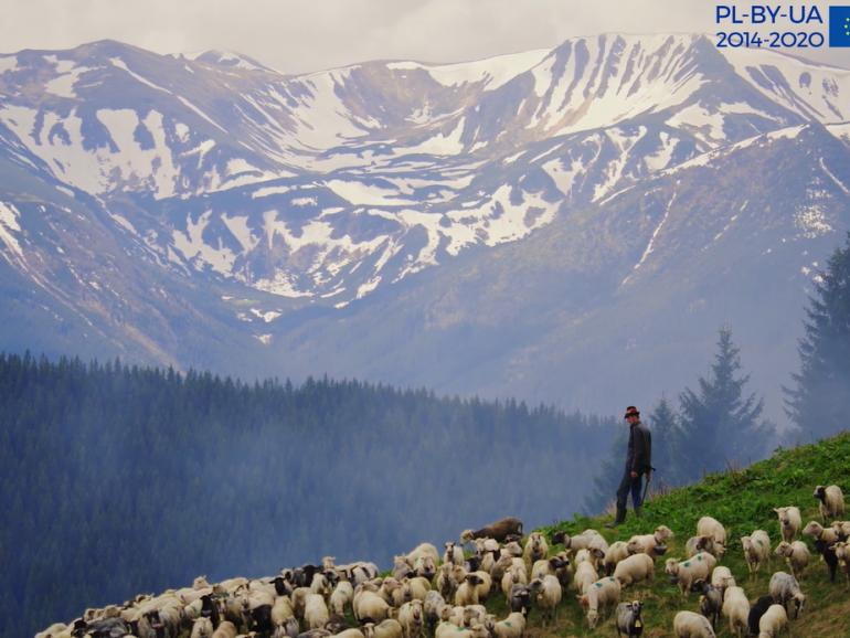 """""""Там, де до сонця близько: традиції вівчарства"""""""